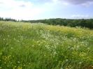 Природа родной страны (РОССИЯ) :: Чудесные места о.Анзер