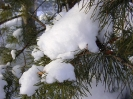 Русская зима :: веточки в снегу