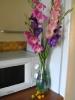 Цветы Крайнего Севера :: Цветы